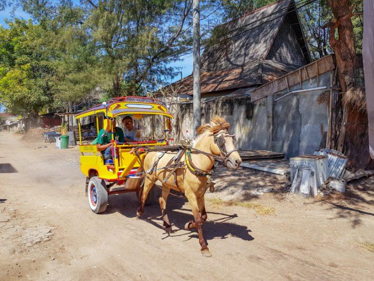 hevosvankkuri ajaa hiekkaisella tiella