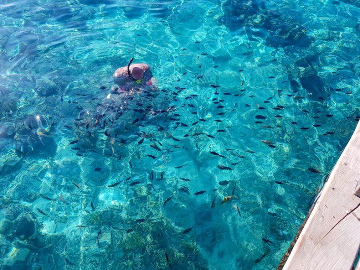 mies snorklaa turkoosissa meressa ja ymparilla on paljon pikkukaloja