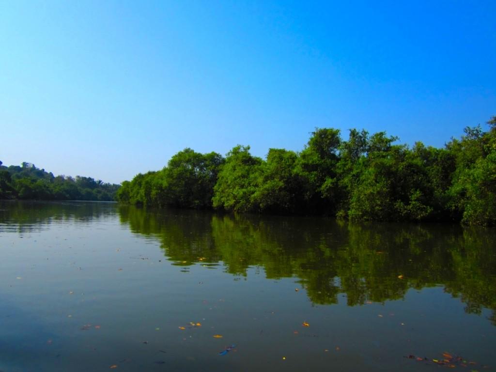 Goa crocodile canal
