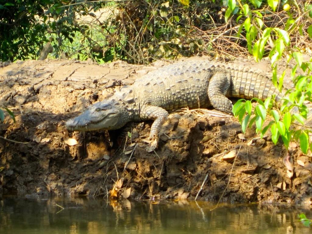 Goa krokotiili retki