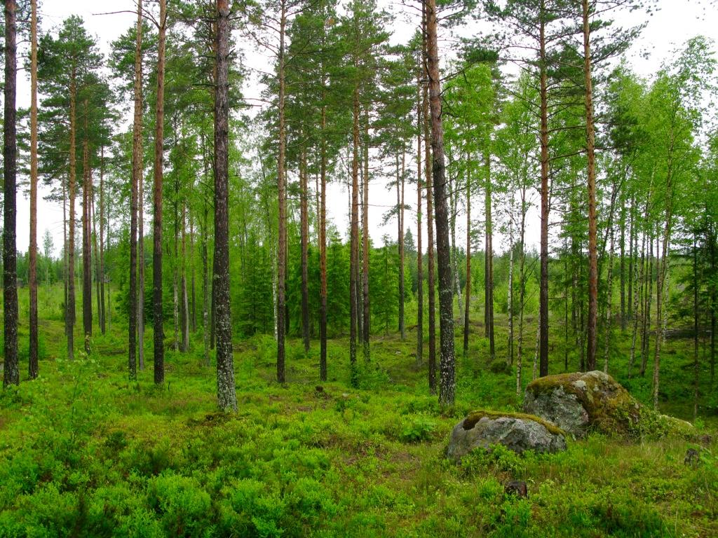 Metsä Porvoo