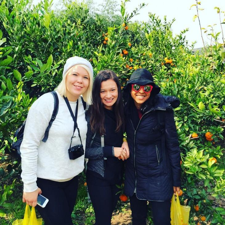 Chongming orange picking