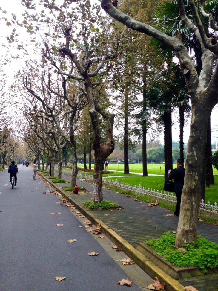 Fall in Shanghai, Fudan University