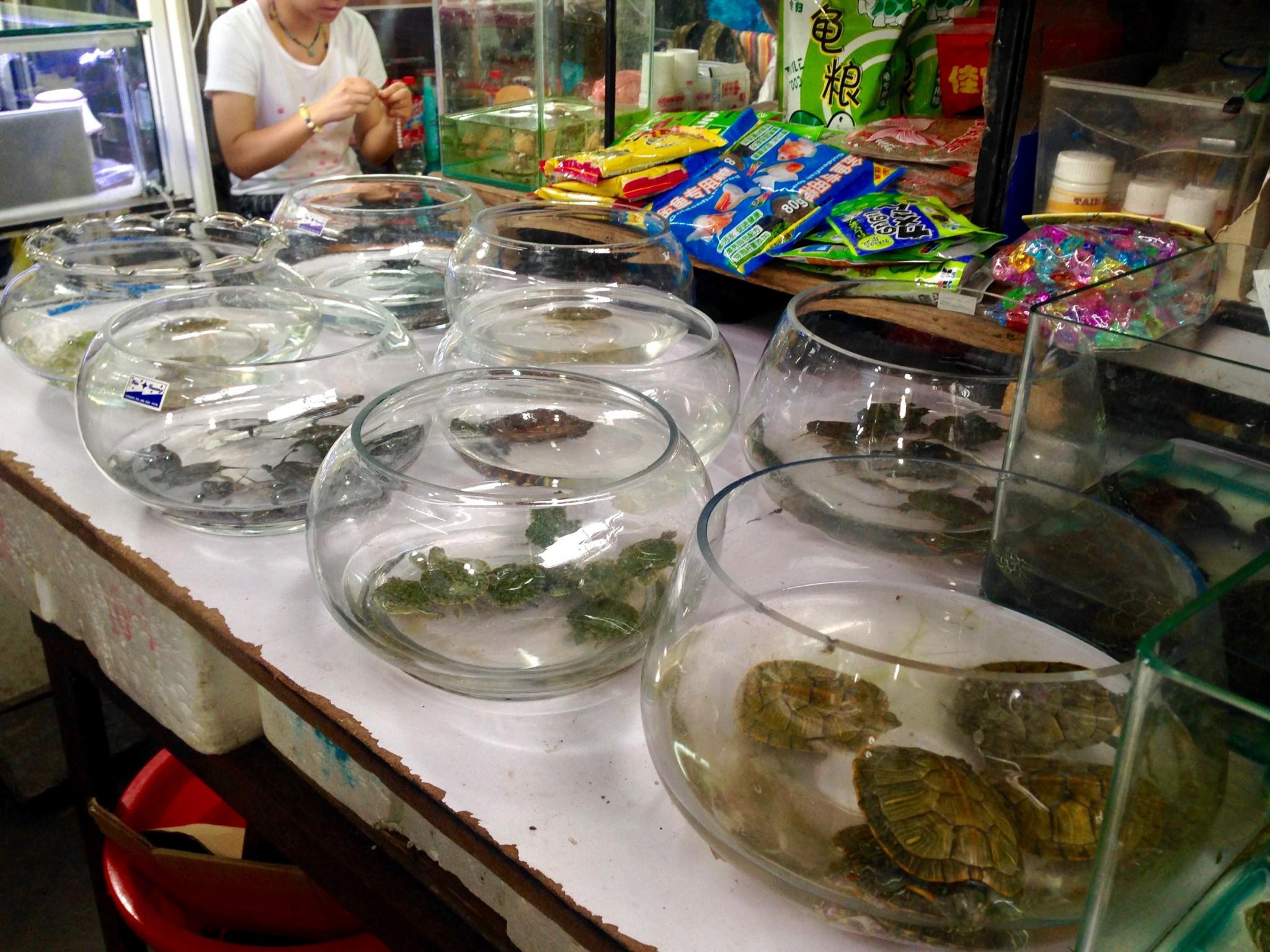 Ötökkämarkkinat Shanghai