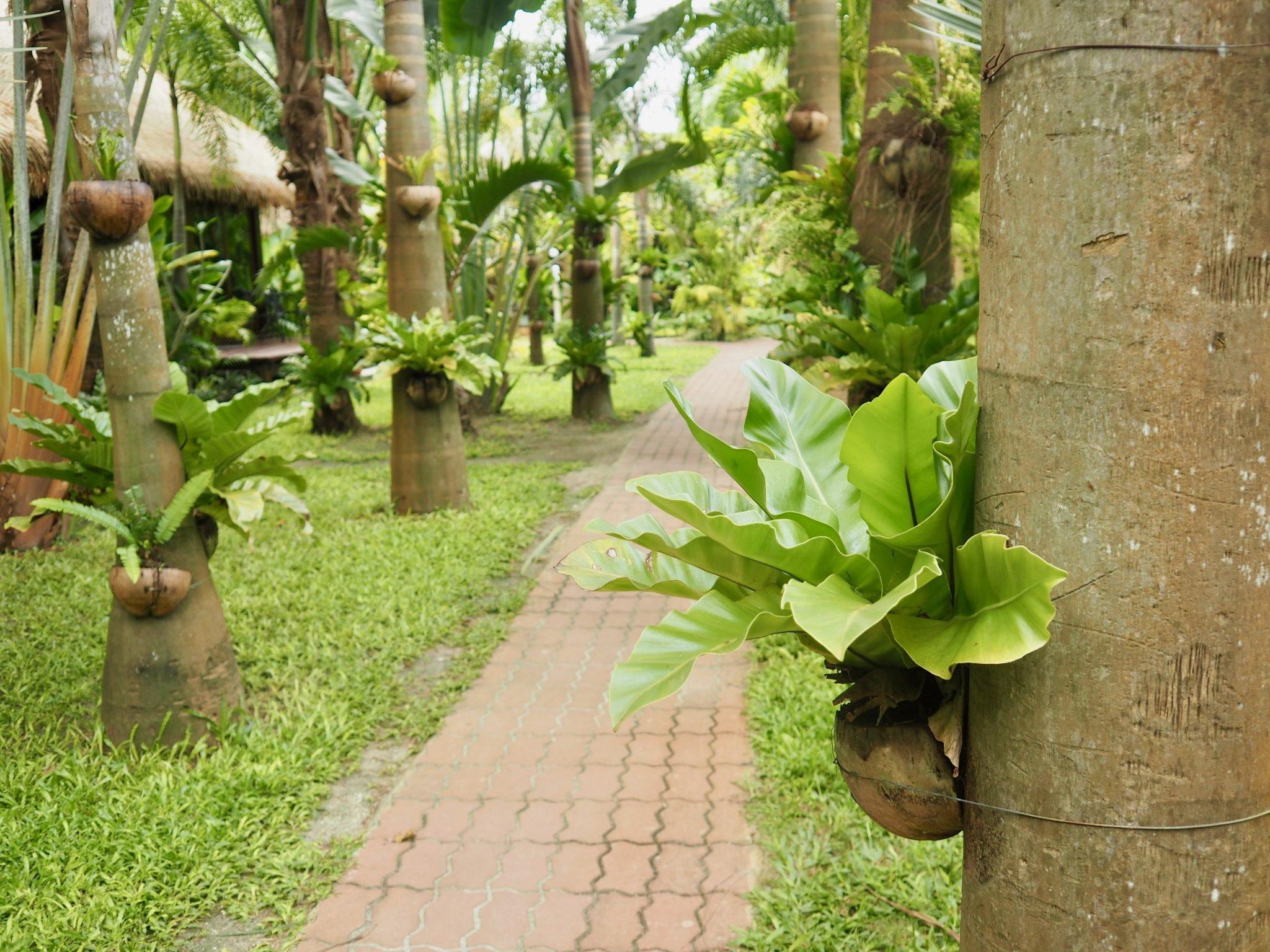 Koh Lipe Thaimaa kokemuksia