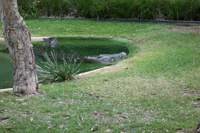 Australia krokotiili eläintarha Sydney