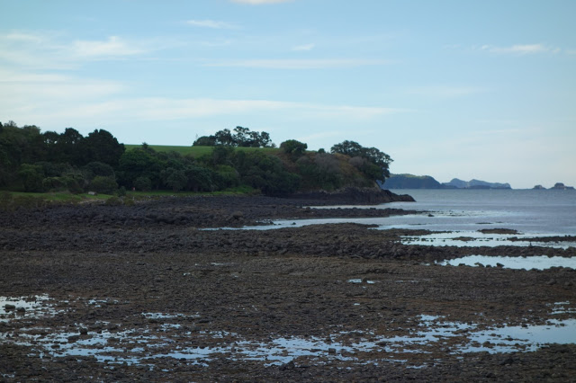Bay of Islands low tide