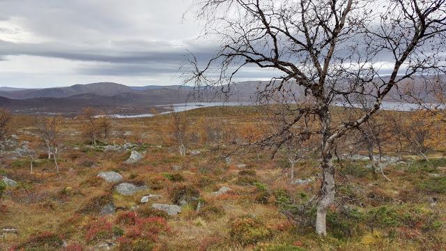 Kilpisjärvi ruska