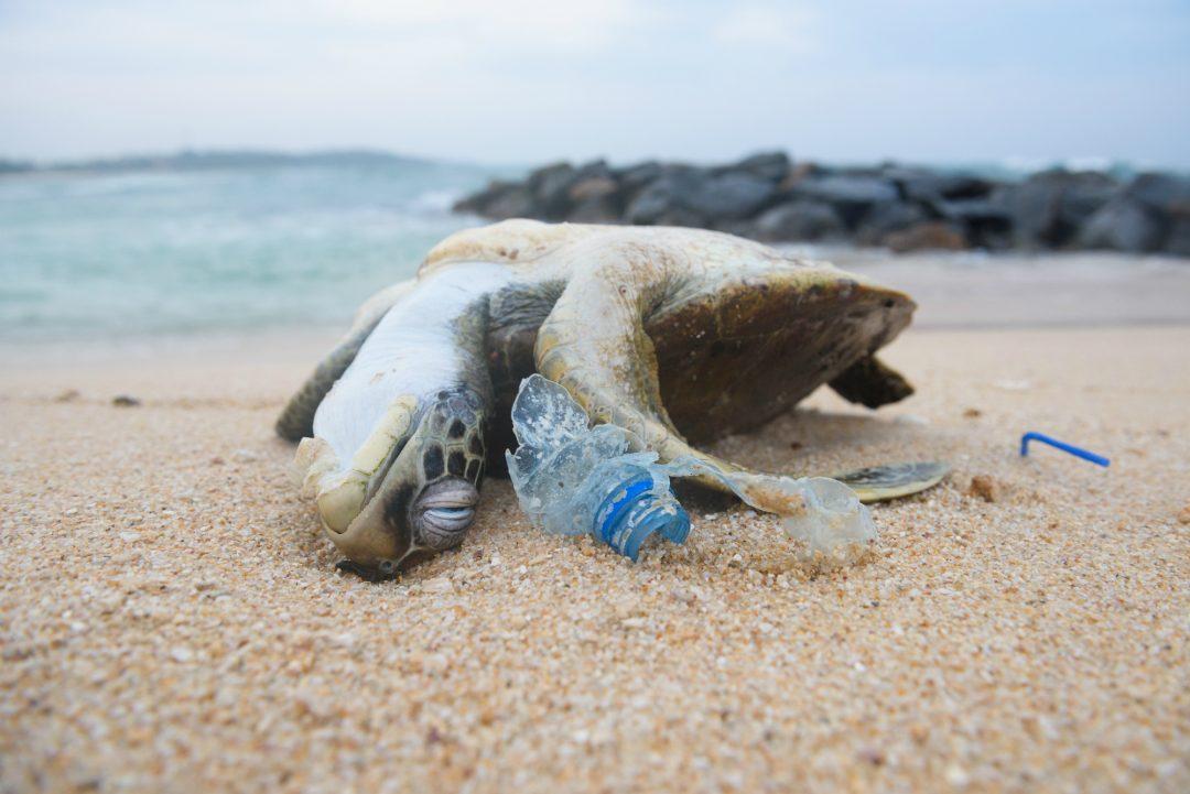 muovin tappama kilpikonna