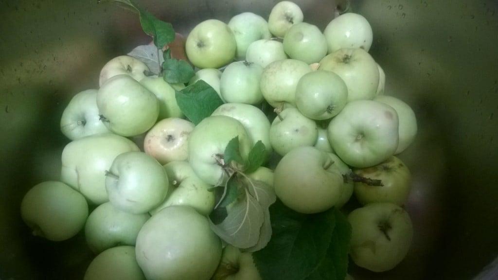 vaaleita hillo-omenoita