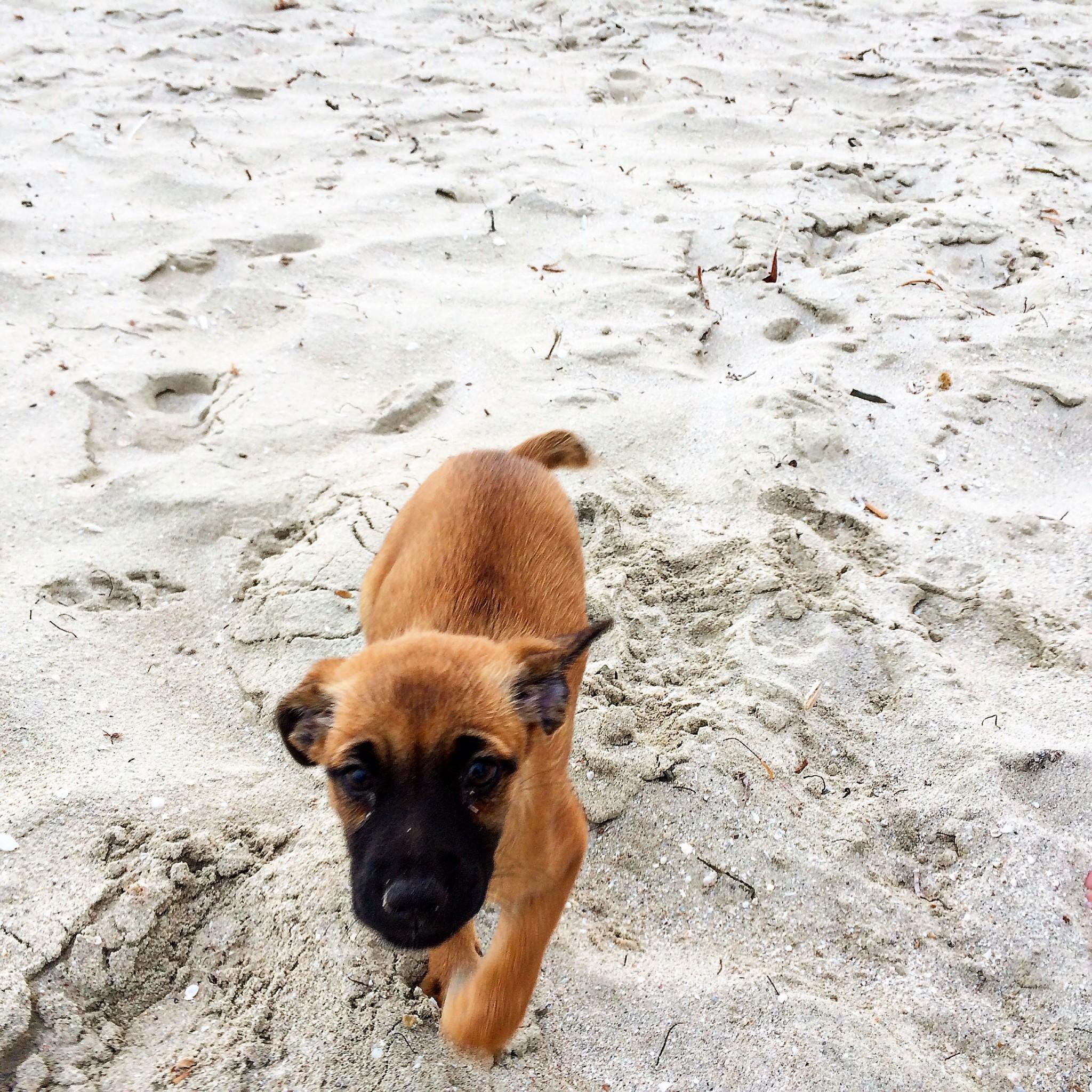 koiranpentu Varadero Laguna Azuin rannalla tuulisena päivänä