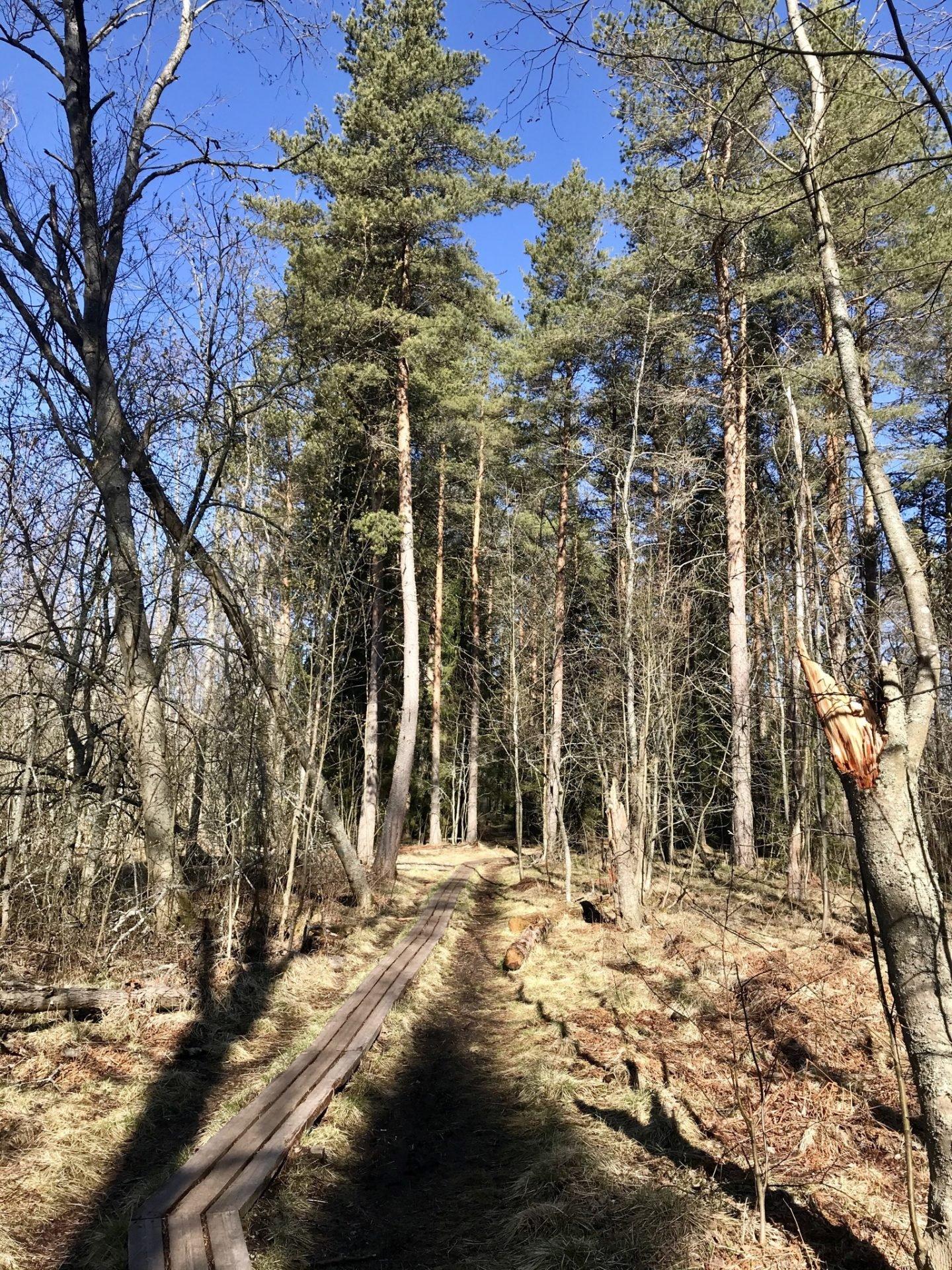 Elban metsäpolku