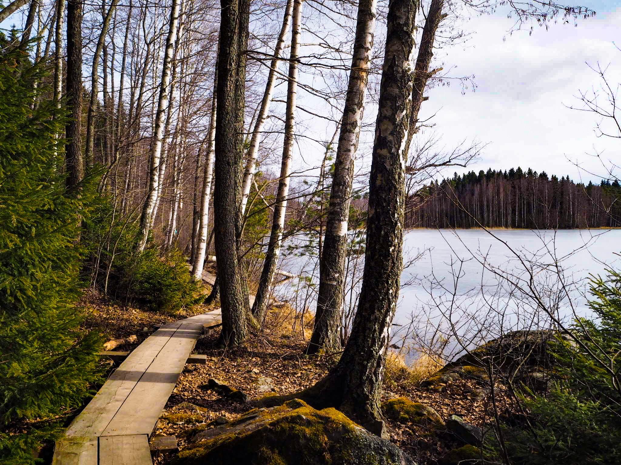 Paluumuutto Suomeen