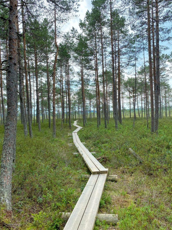 Tammelan monet kansallispuistot