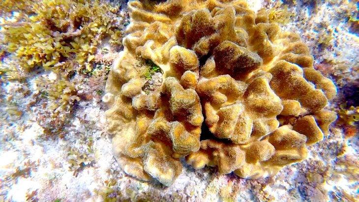 Dating koralleja