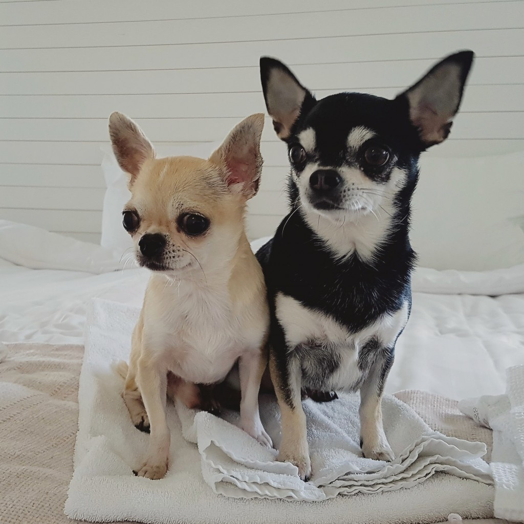 Cheek ja Rico
