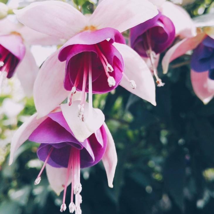 A flower from a secret garden to brighten up thishellip