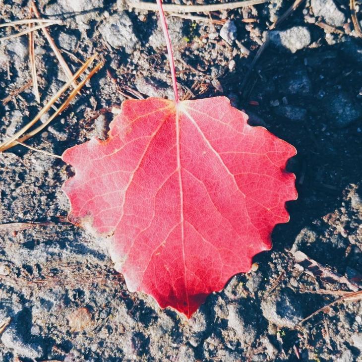 Hello autumn syksy suomenluonto ruska red
