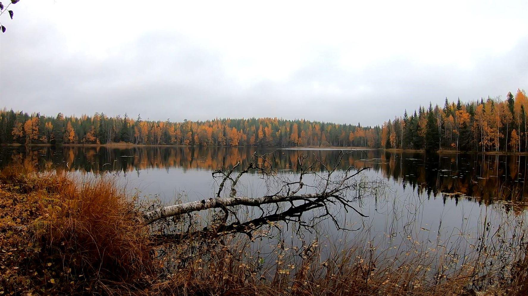 Koukku järvi metsän