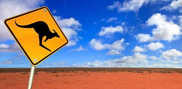 Kenguruja Australian erämaassa