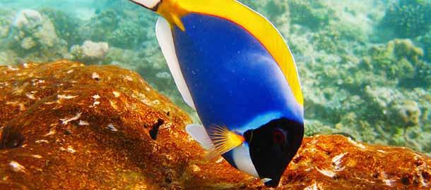 Malediivien vedenalainen maailma
