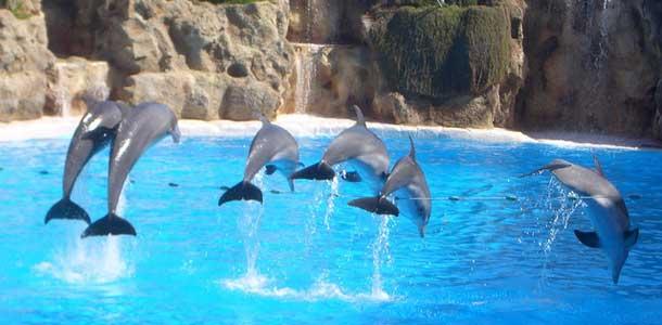 Eläinpuisto Puerto de la Cruzissa