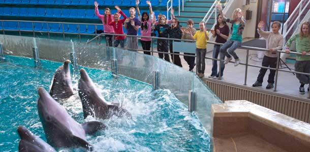 Delfinaario on yksi Särkänniemen vetonauloista