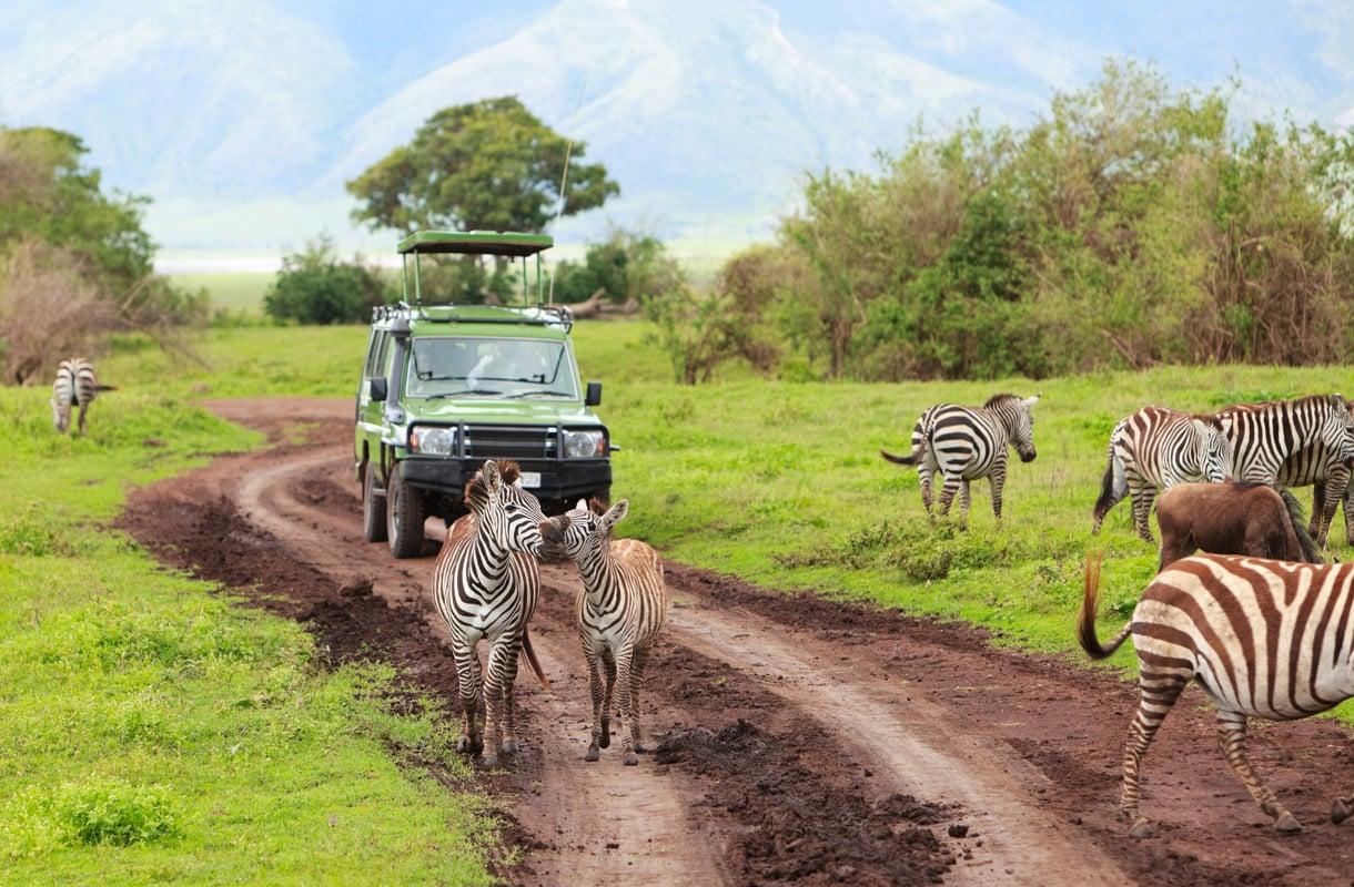 Suositut safarikohteet