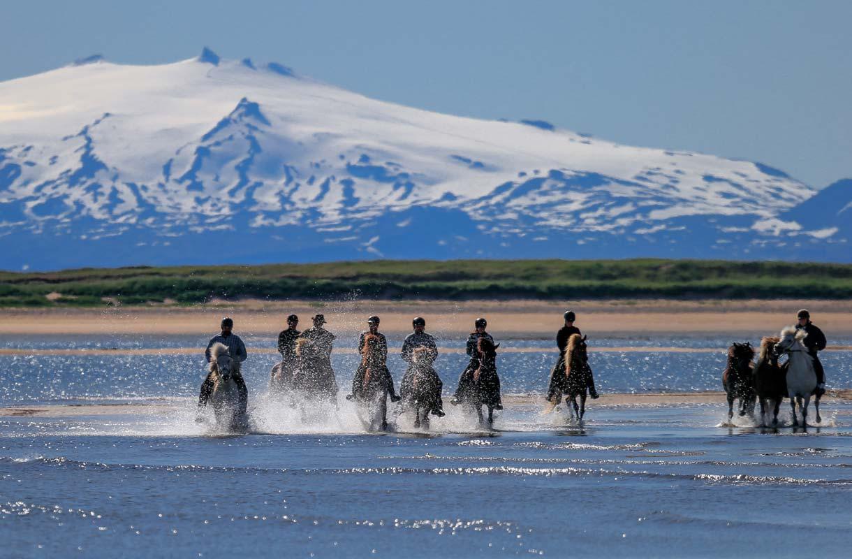 Islanninhevoset tunnetaan töltti-askelluksesta.