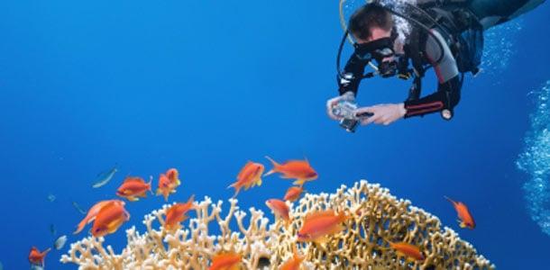 Sukeltaja valokuvaa koralleja