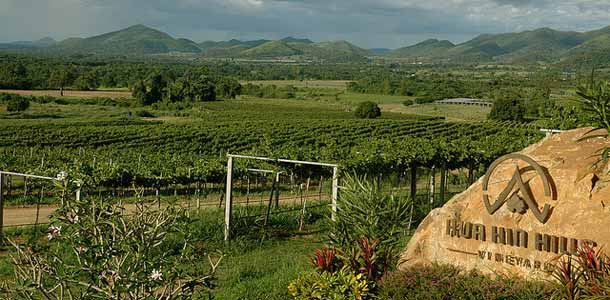 Thaimaan viinintuottajat