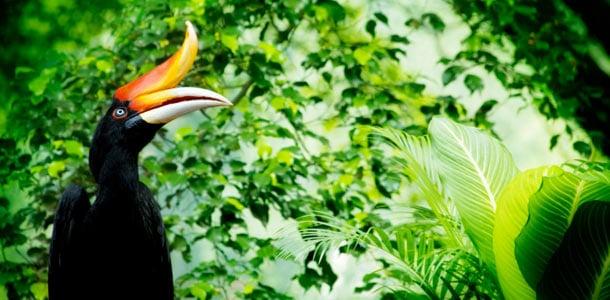 Borneossa voit kokea aidon sademetsän