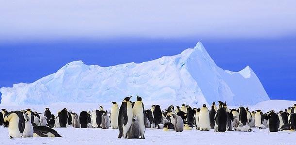 Pingviinit jäätiköllä