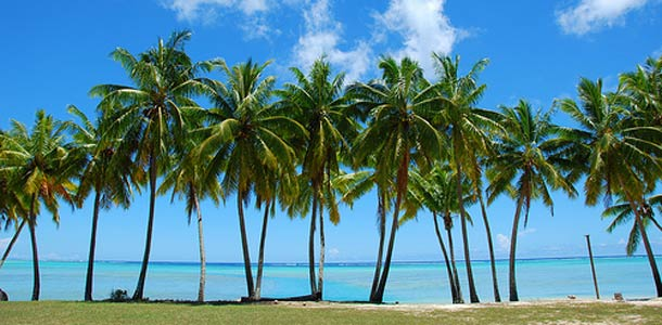 Cookinsaareilla palmuja