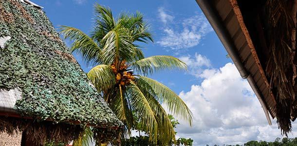 Suriname on sademetsän peittämä
