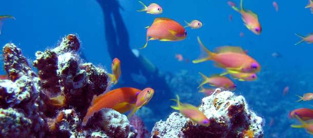 Thaimaa on sukeltajien suosikkikohde