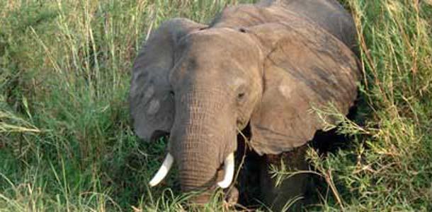 Afrikan eläimet