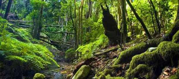 La Gomeran kansallispuisto