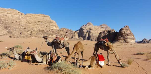 Kamelit Wadi Rumin erämaassa