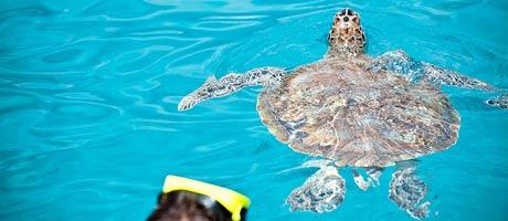 Uimari Karibialla