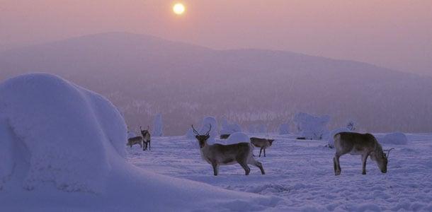 Hauska matkailuhanke Suomessa: turistit kokeilevat Lapin arkea