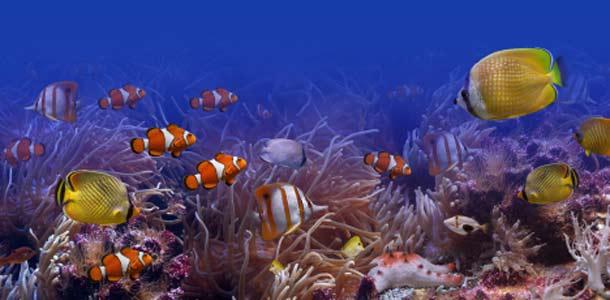 Snorklaaja näkee vedenalaisen maailman