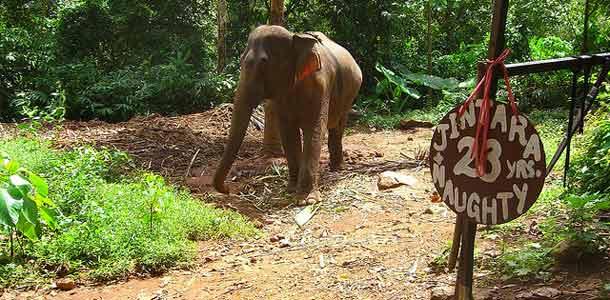 Elefanttisaari Koh Chang