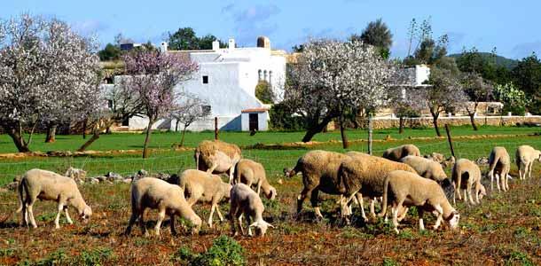 Lennot, majoitus ja liikkuminen Baleaarisaarilla