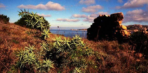Sardinia on Välimeren toiseksi suurin saari