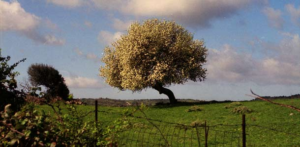 Kevät Sardiniassa