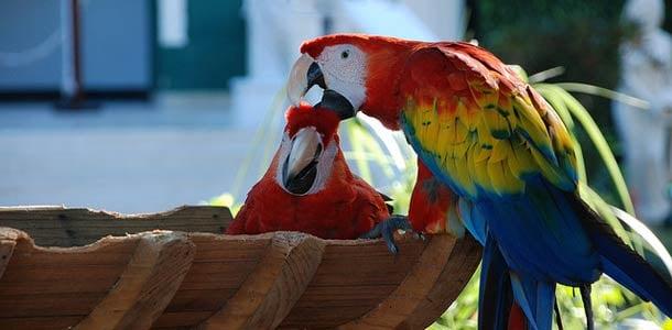 Playa del Carmenissa on useita teemapuistoja perheille