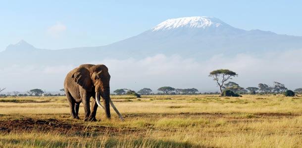 Elefantti Afrikassa