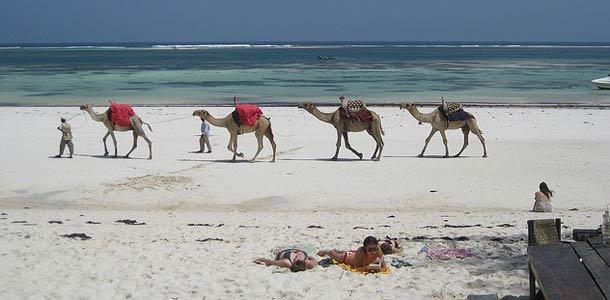 Kamelit rannalla Mombasassa