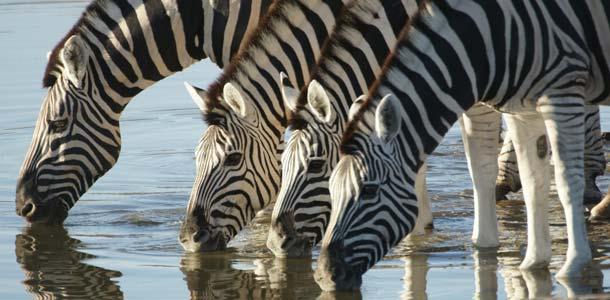 Seeprat Namibiassa